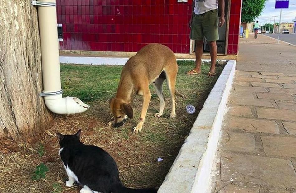 Ibipeba  Prefeitura instala comedouros para cães e gatos abandonados 467b5a1ff40